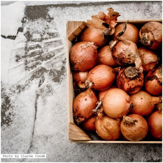 winter onions
